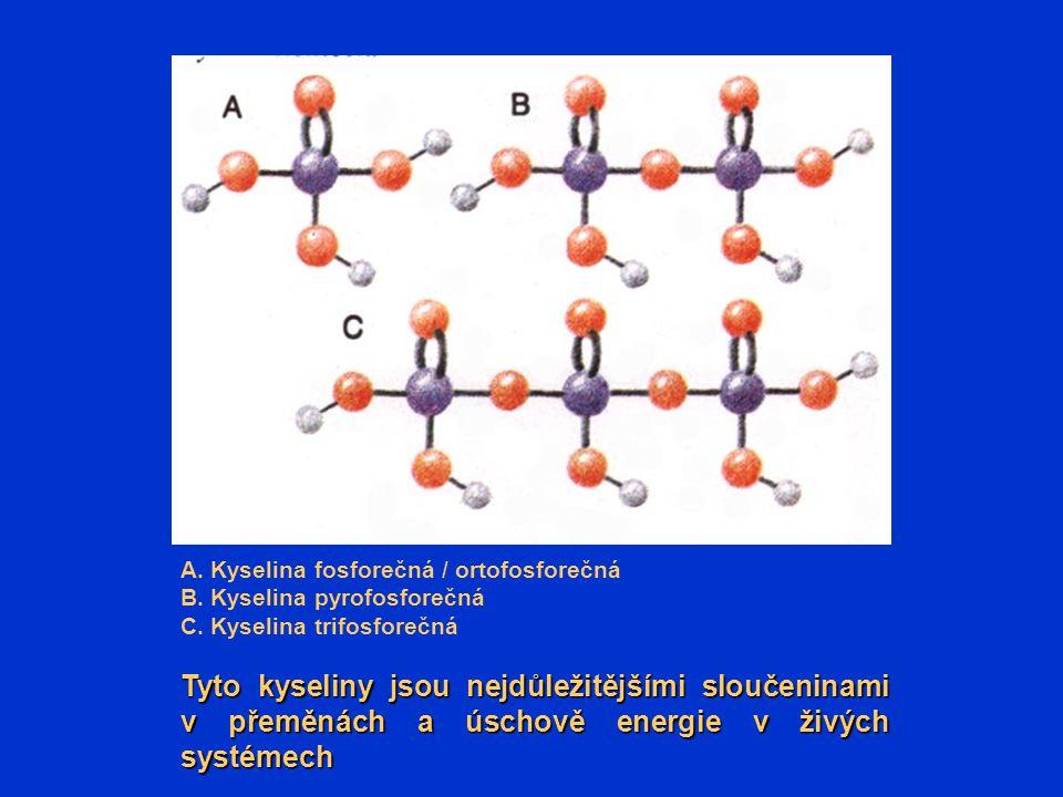 A. Kyselina fosforečná / ortofosforečná B. Kyselina pyrofosforečná C. Kyselina trifosforečná Tyto kyseliny jsou nejdůležitějšími sloučeninami v přeměn