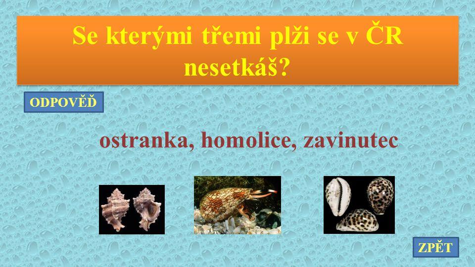 Se kterými třemi plži se v ČR nesetkáš? ostranka, homolice, zavinutec ZPĚT ODPOVĚĎ