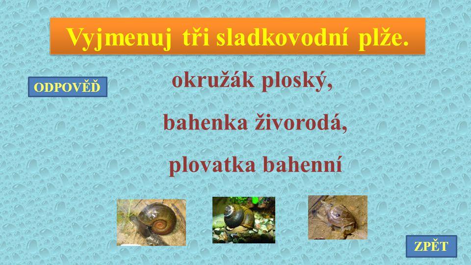 Vyjmenuj tři sladkovodní plže. okružák ploský, bahenka živorodá, plovatka bahenní ZPĚT ODPOVĚĎ