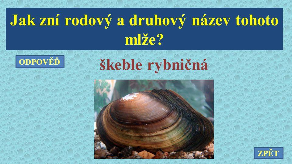 Jak zní rodový a druhový název tohoto mlže? škeble rybničná ZPĚT ODPOVĚĎ