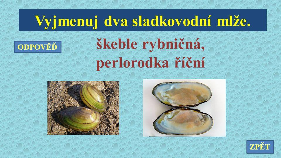 Vyjmenuj dva sladkovodní mlže. škeble rybničná, perlorodka říční ZPĚT ODPOVĚĎ
