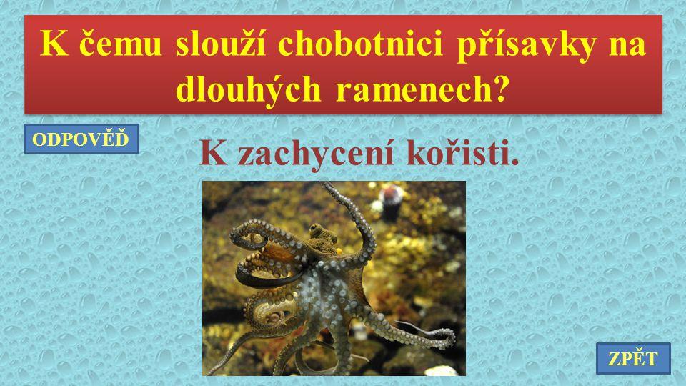 K čemu slouží chobotnici přísavky na dlouhých ramenech? K zachycení kořisti. ZPĚT ODPOVĚĎ