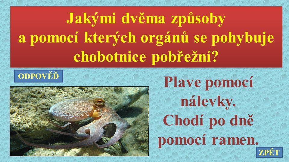 Jakými dvěma způsoby a pomocí kterých orgánů se pohybuje chobotnice pobřežní? Jakými dvěma způsoby a pomocí kterých orgánů se pohybuje chobotnice pobř