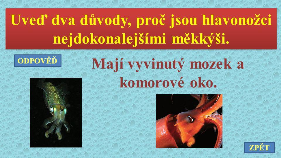 Uveď dva důvody, proč jsou hlavonožci nejdokonalejšími měkkýši. Mají vyvinutý mozek a komorové oko. ZPĚT ODPOVĚĎ