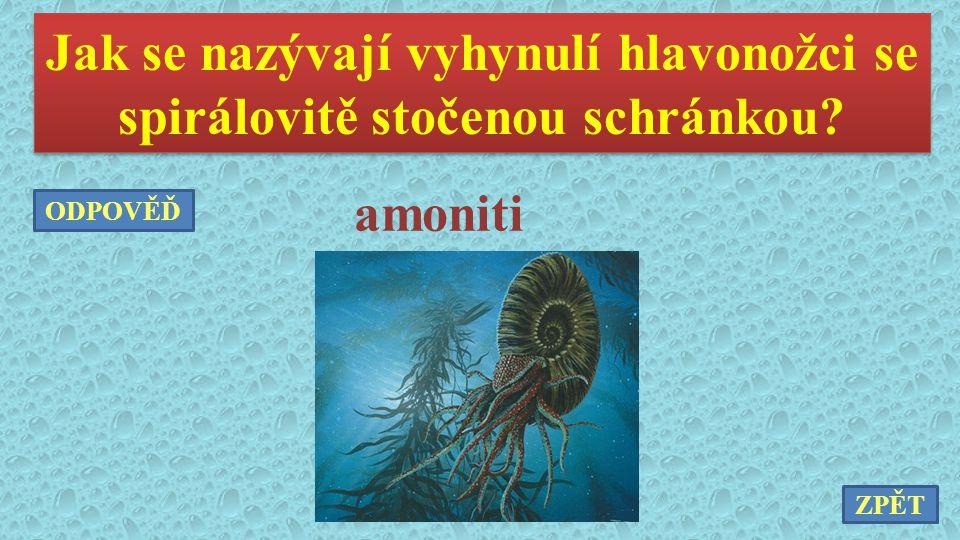 Jak se nazývají vyhynulí hlavonožci se spirálovitě stočenou schránkou? amoniti ZPĚT ODPOVĚĎ