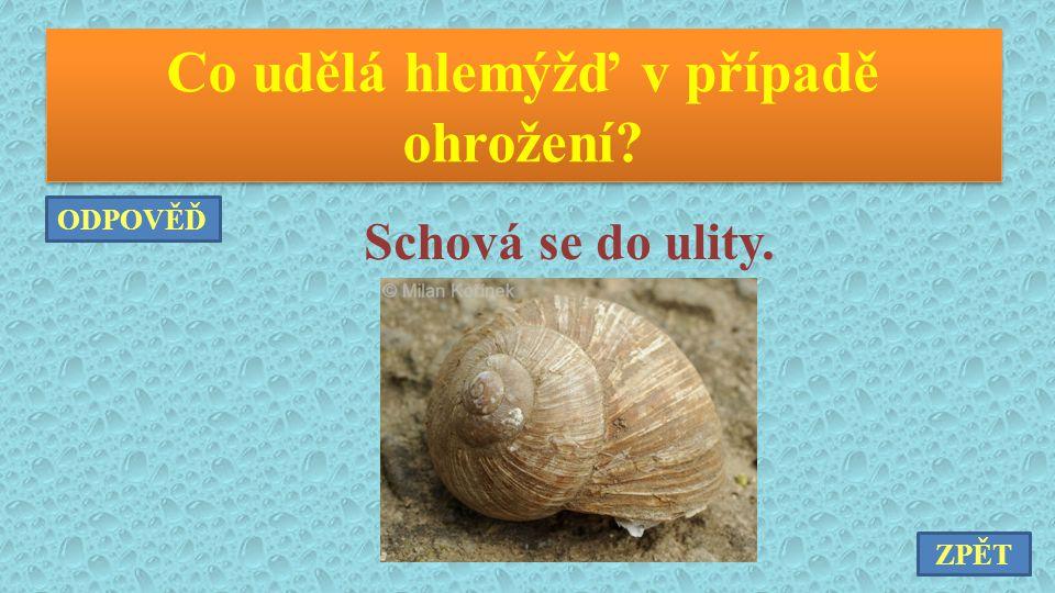 Jakými dvěma způsoby a pomocí kterých orgánů se pohybuje chobotnice pobřežní.
