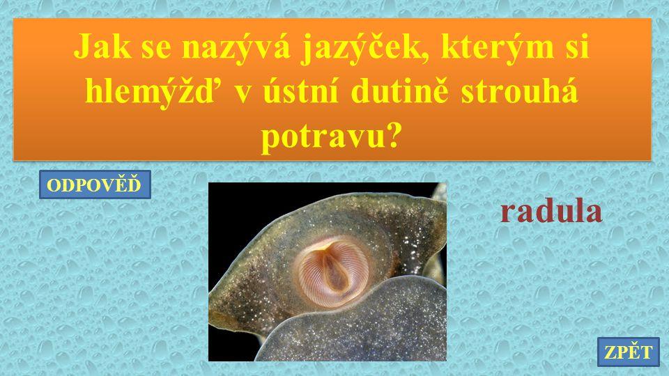 Jak se nazývá jazýček, kterým si hlemýžď v ústní dutině strouhá potravu? radula ZPĚT ODPOVĚĎ