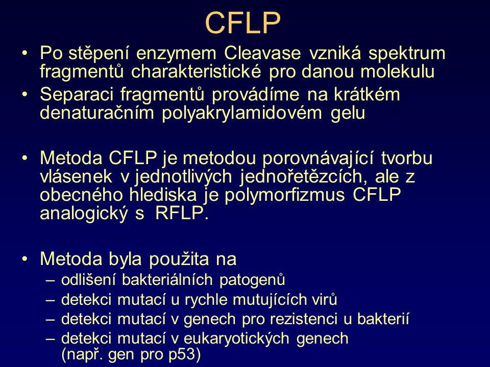 CFLP Po stěpení enzymem Cleavase vzniká spektrum fragmentů charakteristické pro danou molekulu Separaci fragmentů provádíme na krátkém denaturačním po