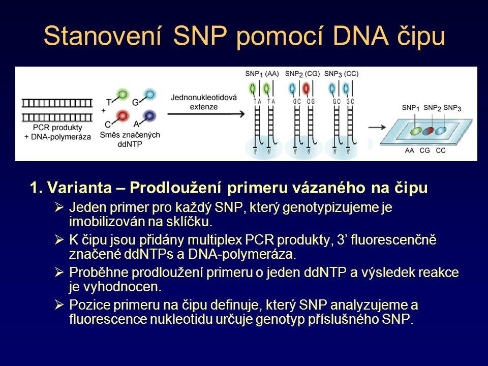 Stanovení SNP pomocí DNA čipu 1. Varianta – Prodloužení primeru vázaného na čipu  Jeden primer pro každý SNP, který genotypizujeme je imobilizován na