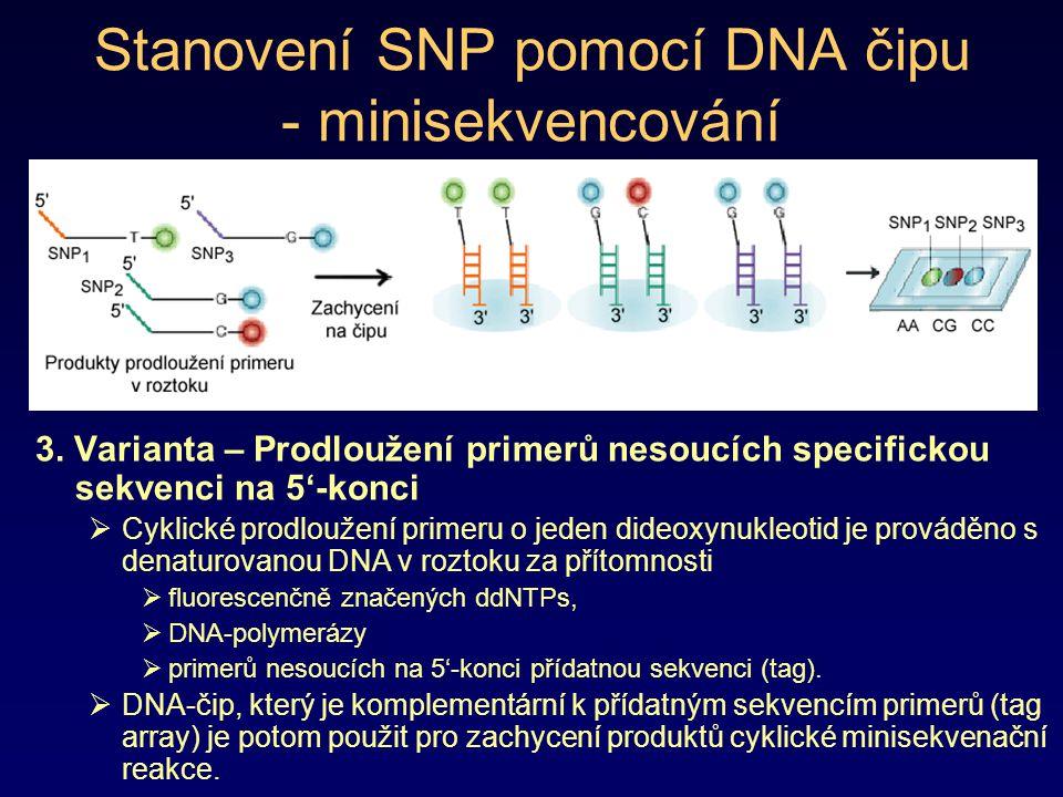 Stanovení SNP pomocí DNA čipu - minisekvencování 3. Varianta – Prodloužení primerů nesoucích specifickou sekvenci na 5'-konci  Cyklické prodloužení p