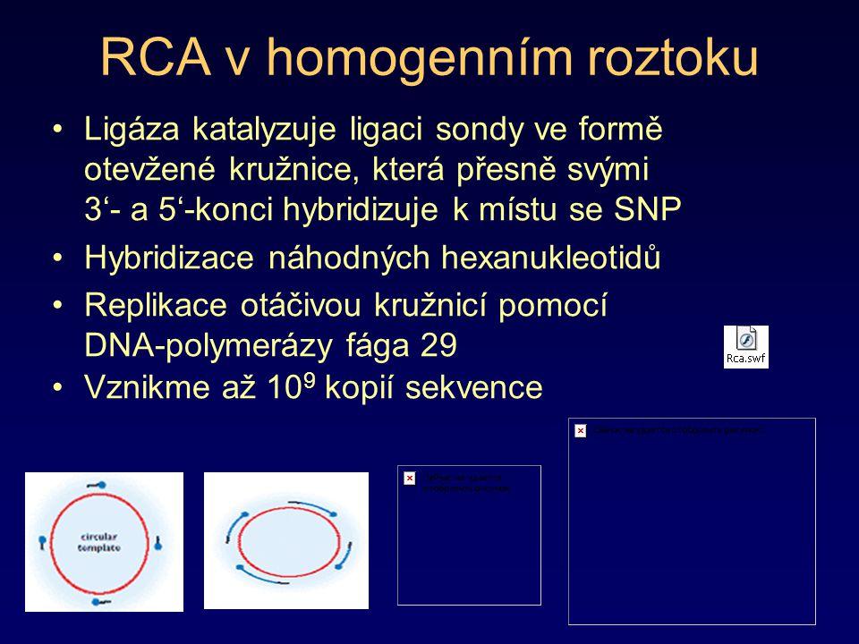 RCA v homogenním roztoku Ligáza katalyzuje ligaci sondy ve formě otevžené kružnice, která přesně svými 3'- a 5'-konci hybridizuje k místu se SNP Hybri