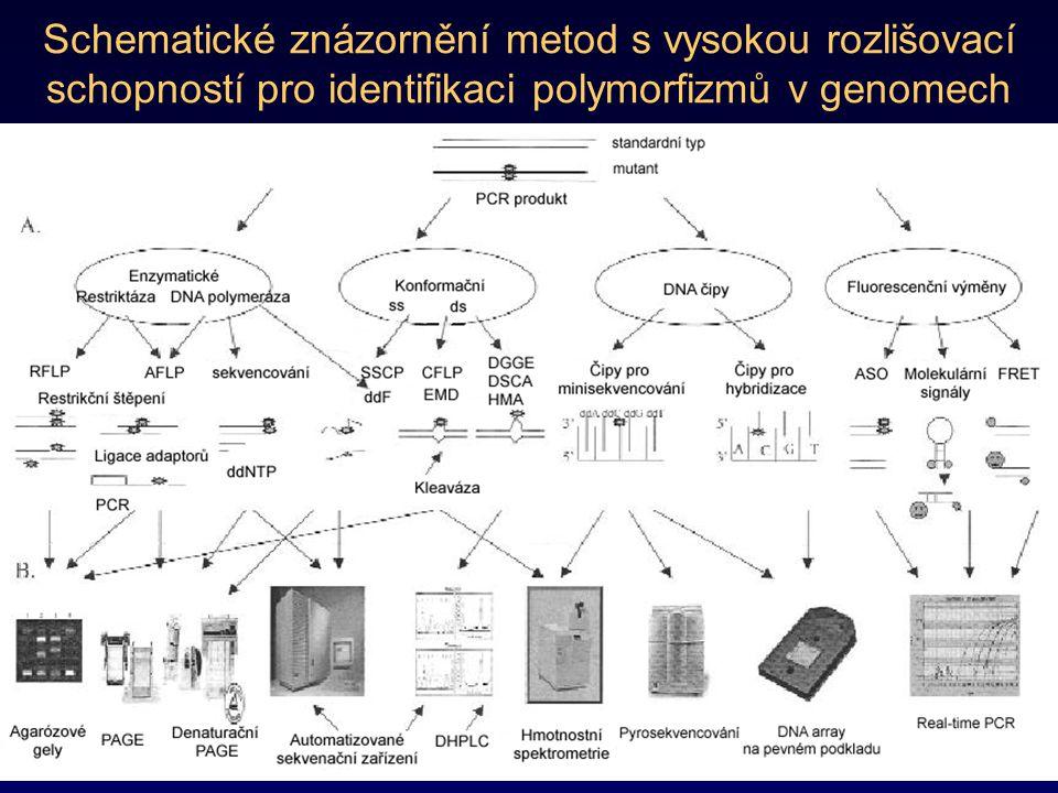 Schematické znázornění metod s vysokou rozlišovací schopností pro identifikaci polymorfizmů v genomech
