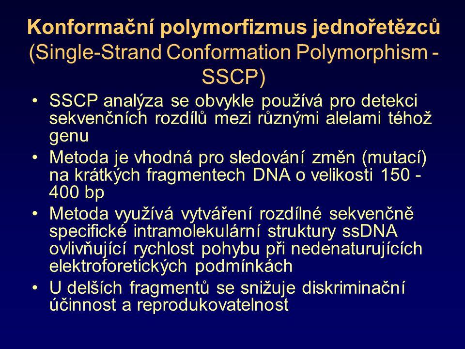 Princip metody SSCP zvýšení účinnosti SSCP se dosahuje různými modifikacemi: –RFLP-SSCP přístup kombinující štěpení DNA restriktázami s následnou SSCP vzdálenost polymorfizmu od konce fragmentu –Vazbou různých látek ovlivňujících elektroforetickou mobilitu ssDNA –RNA-SSCP (je nutno připravit ssRNA transkripcí pomocí T7- nebo SP6-RNA polymerázy) SSCP je vhodná pro analýzu mutací v prokaryotických (rDNA), eukaryotických a virových genomech Homozygotní DNA vytváří 2 elektroforetické formy Heterozygotní DNA obsahující sekvence dvou různých alel vytváří 4 elektroforetické formy