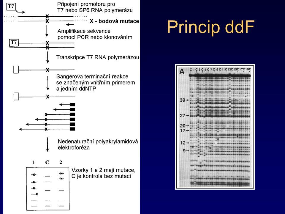Denaturační gradientová gelová elektroforéza (Denaturating Gradient Gel Electrophoresis - DGGE) Metoda využívá rozdílné elektroforetické mobility u částečně denaturované DNA a DNA v nedenaturovaném stavu Vzorky o velikosti 150 - 1200 bp se analyzují v polyakrylamidovém gelu s denaturačním gradientem zajištěným –postupně vzrůstající teplotou (TGGE) –vzrůstající koncentrací denaturačního činidla formamidu močoviny dsDNA se pohybuje během elektroforézy v závislosti na její velikosti a pozvolně denaturuje –na začátku elektroforézy není patrný žádný rozdíl v elektroforetické mobilitě –po určité době denaturace ovlivní rychlost elektroforetické migrace (zpomalení vzhledem k dsDNA) –elektroforéza sama umožní odlišit sekvenční polymorfizmus na základě odlišné hodnoty Tm srovnávaných vzorků Zvýšení rozlišovací schopnosti dosáhneme –připojením GC-svorek na konce analyzovaných fragmentů zamezíme tím úplné denaturaci až do jednořetězcových forem a zvýšíme –provedením 2-D (dvojrozměrné) DGGE