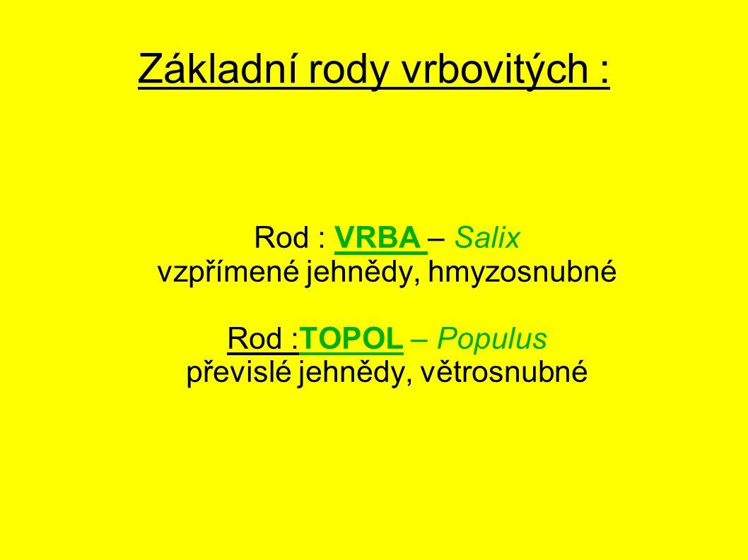 Základní rody vrbovitých : Rod : VRBA – Salix vzpřímené jehnědy, hmyzosnubné Rod :TOPOL – Populus převislé jehnědy, větrosnubné