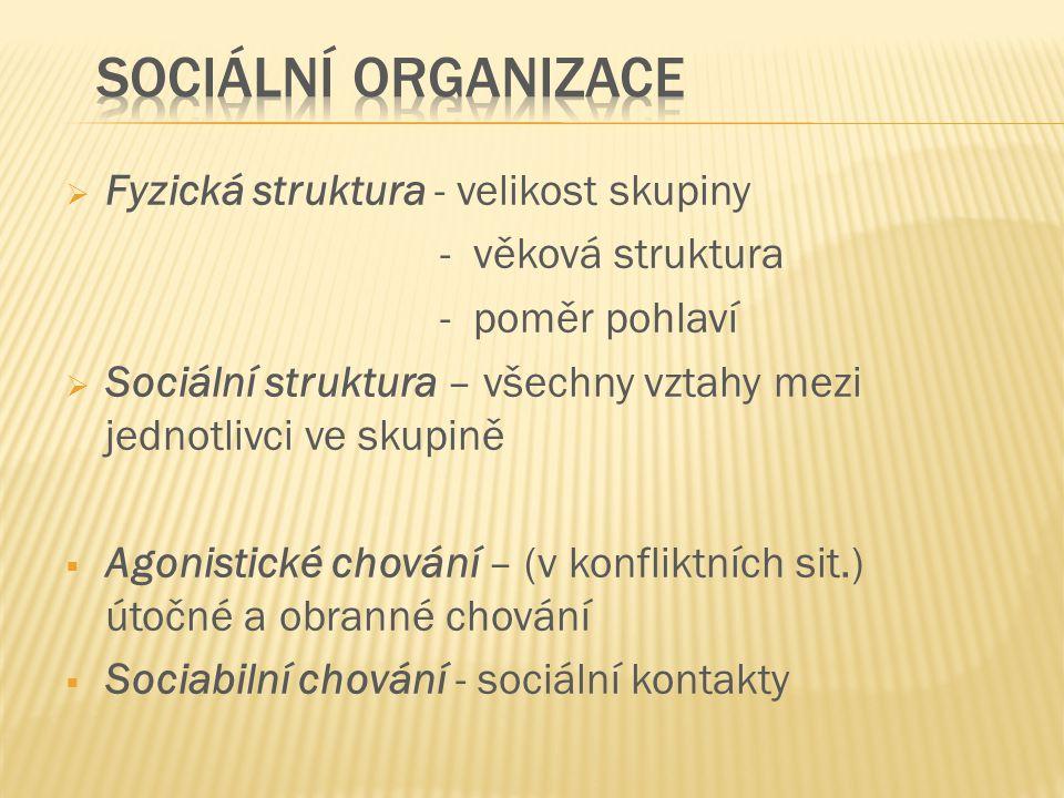  Fyzická struktura - velikost skupiny - věková struktura - poměr pohlaví  Sociální struktura – všechny vztahy mezi jednotlivci ve skupině  Agonisti