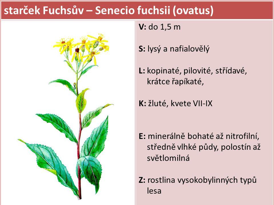 starček Fuchsův – Senecio fuchsii (ovatus) V: do 1,5 m S: lysý a nafialovělý L: kopinaté, pilovité, střídavé, krátce řapíkaté, K: žluté, kvete VII-IX