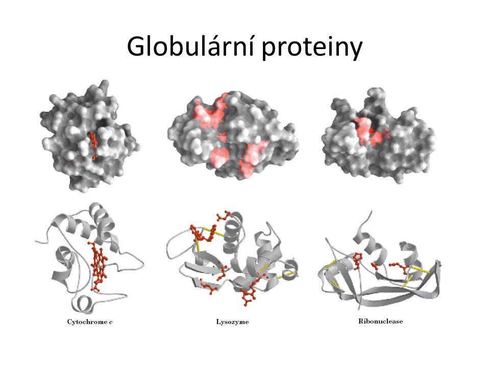 Globulární proteiny