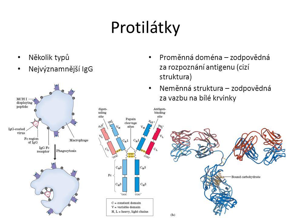 Protilátky Několik typů Nejvýznamnější IgG Proměnná doména – zodpovědná za rozpoznání antigenu (cizí struktura) Neměnná struktura – zodpovědná za vazb