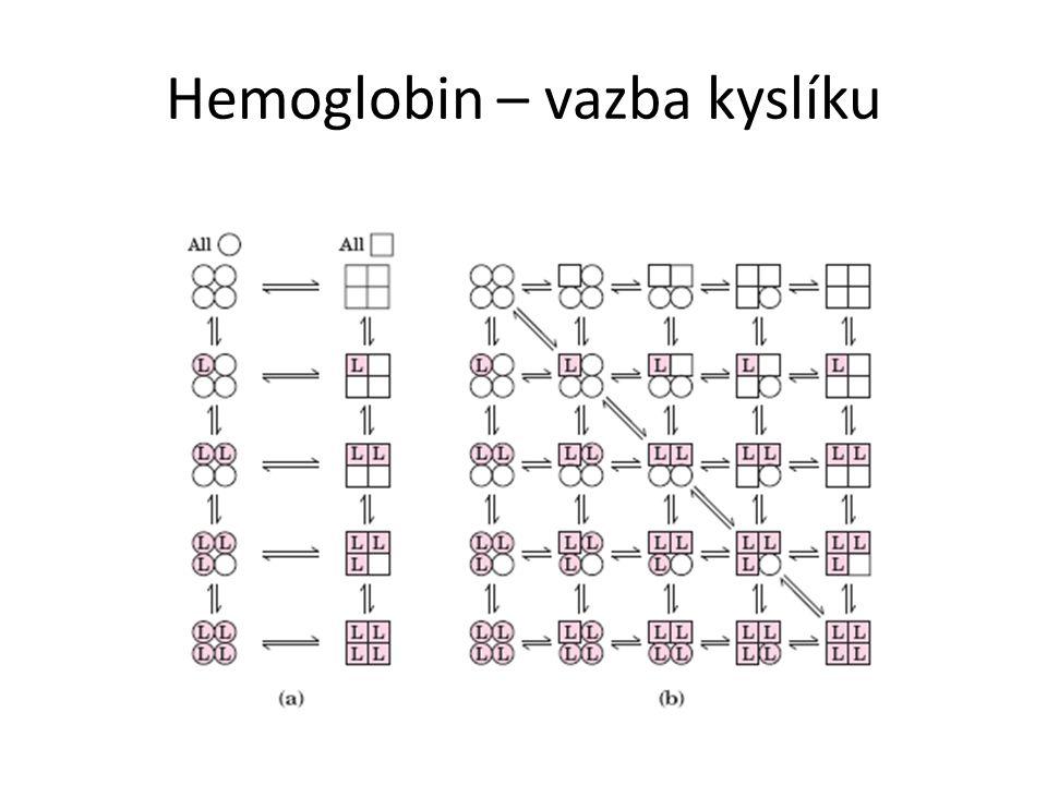 Hemoglobin – vazba kyslíku