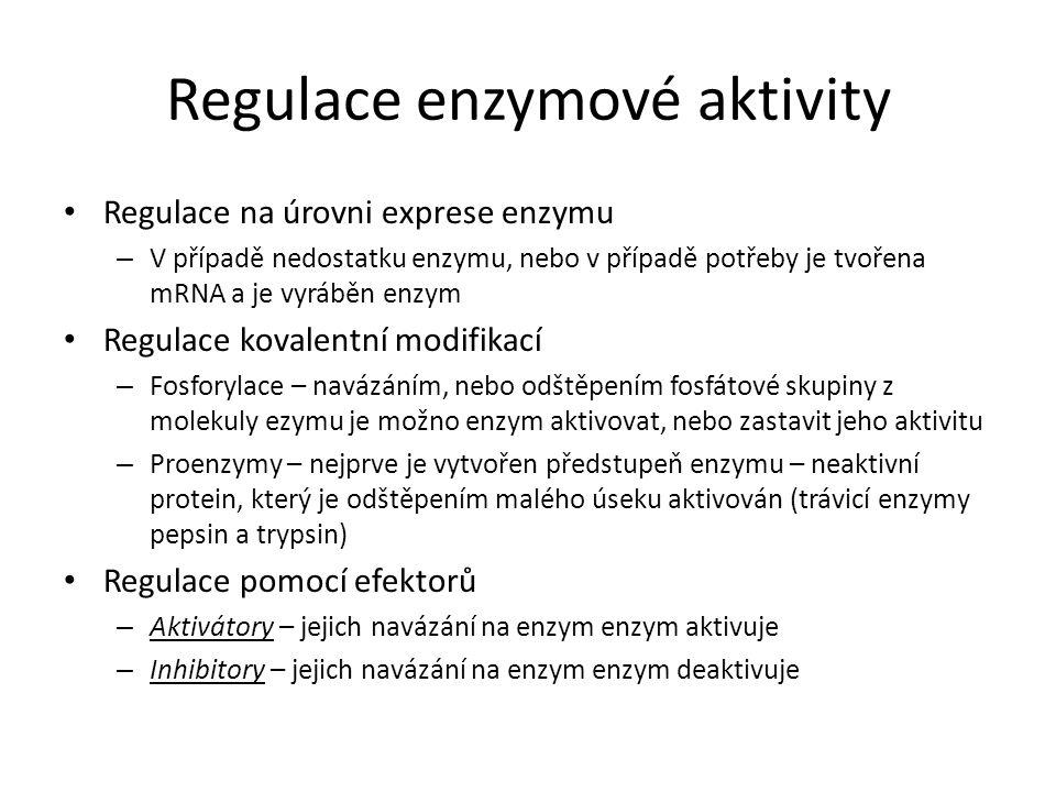 Regulace enzymové aktivity Regulace na úrovni exprese enzymu – V případě nedostatku enzymu, nebo v případě potřeby je tvořena mRNA a je vyráběn enzym