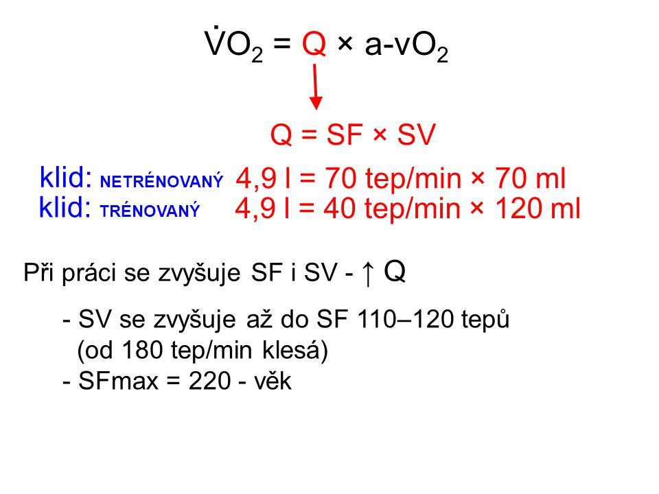 VO 2 = Q × a-vO 2. Q = SF × SV 4,9 l = 70 tep/min × 70 ml klid: NETRÉNOVANÝ 4,9 l = 40 tep/min × 120 ml klid: TRÉNOVANÝ Při práci se zvyšuje SF i SV -