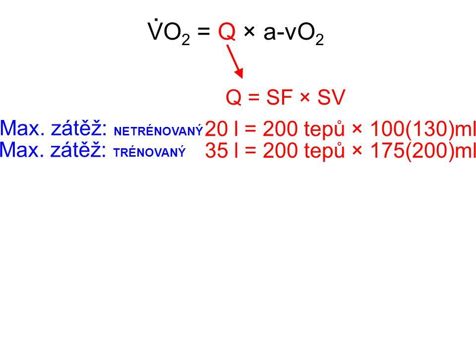 VO 2 = Q × a-vO 2. Q = SF × SV 20 l = 200 tepů × 100(130)ml Max. zátěž: NETRÉNOVANÝ 35 l = 200 tepů × 175(200)ml Max. zátěž: TRÉNOVANÝ