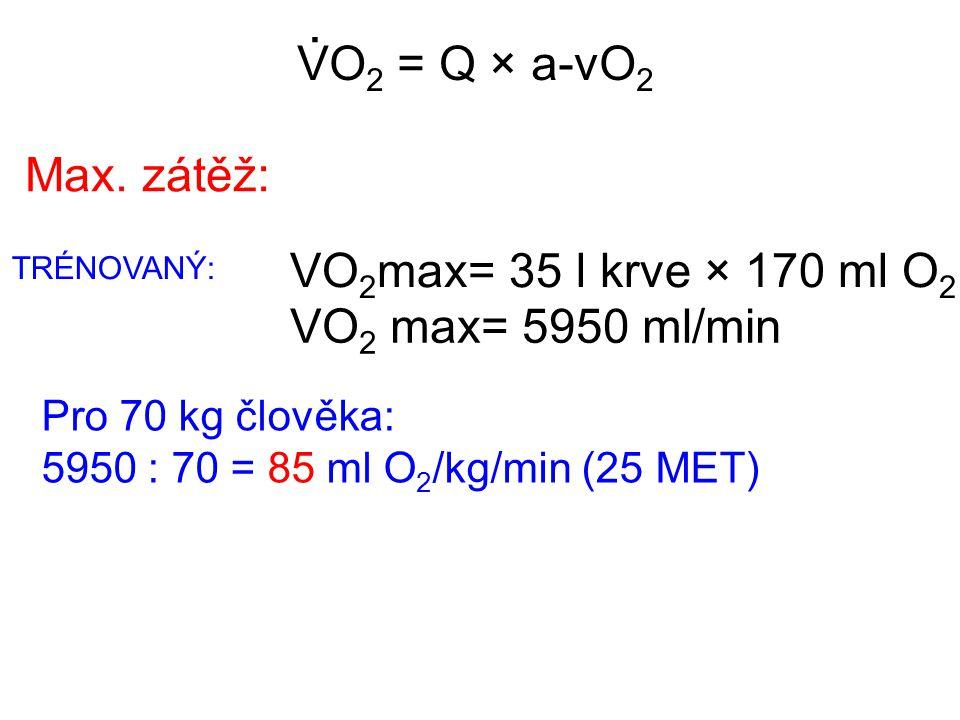 VO 2 = Q × a-vO 2. Pro 70 kg člověka: 5950 : 70 = 85 ml O 2 /kg/min (25 MET) Max. zátěž: VO 2 max= 35 l krve × 170 ml O 2 VO 2 max= 5950 ml/min TRÉNOV