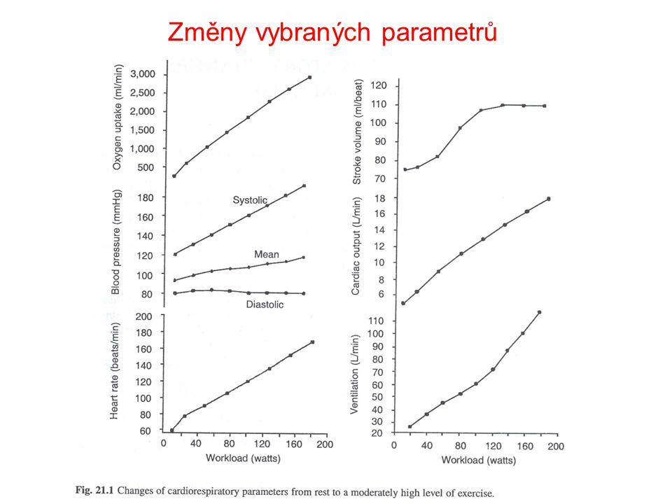 Pohybová zátěž Svalová činnost je spojena se zvýšením energetických nároků.