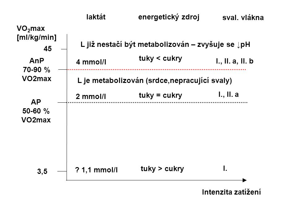 3,5 VO 2 max [ml/kg/min] 45 Intenzita zatížení AP 50-60 % VO2max AnP 70-90 % VO2max laktát energetický zdroj ? 1,1 mmol/l sval. vlákna 2 mmol/l 4 mmol
