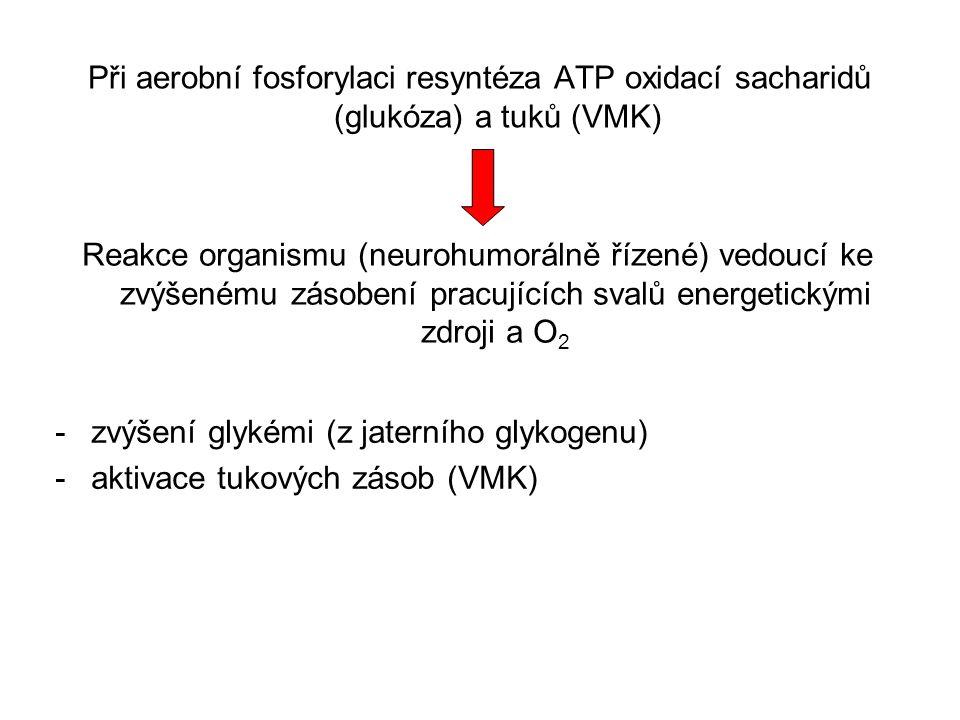 Při aerobní fosforylaci resyntéza ATP oxidací sacharidů (glukóza) a tuků (VMK) Reakce organismu (neurohumorálně řízené) vedoucí ke zvýšenému zásobení
