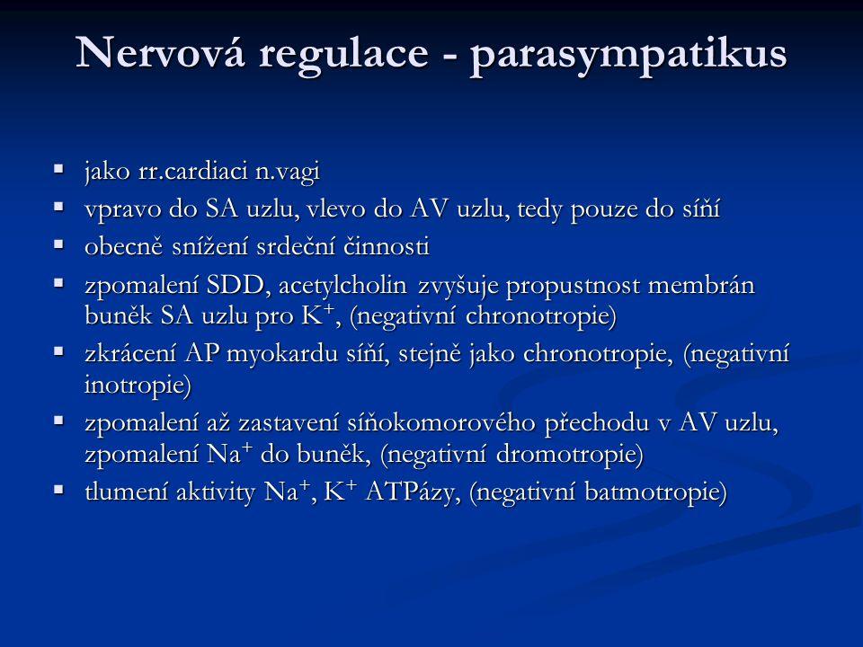 Nervová regulace - parasympatikus  jako rr.cardiaci n.vagi  vpravo do SA uzlu, vlevo do AV uzlu, tedy pouze do síňí  obecně snížení srdeční činnosti  zpomalení SDD, acetylcholin zvyšuje propustnost membrán buněk SA uzlu pro K +, (negativní chronotropie)  zkrácení AP myokardu síňí, stejně jako chronotropie, (negativní inotropie)  zpomalení až zastavení síňokomorového přechodu v AV uzlu, zpomalení Na + do buněk, (negativní dromotropie)  tlumení aktivity Na +, K + ATPázy, (negativní batmotropie)