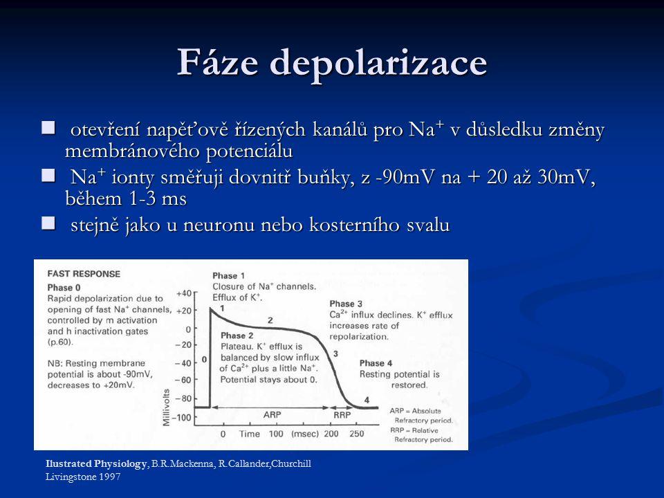Fáze depolarizace otevření napěťově řízených kanálů pro Na + v důsledku změny membránového potenciálu otevření napěťově řízených kanálů pro Na + v důsledku změny membránového potenciálu Na + ionty směřuji dovnitř buňky, z -90mV na + 20 až 30mV, během 1-3 ms Na + ionty směřuji dovnitř buňky, z -90mV na + 20 až 30mV, během 1-3 ms stejně jako u neuronu nebo kosterního svalu stejně jako u neuronu nebo kosterního svalu Ilustrated Physiology, B.R.Mackenna, R.Callander,Churchill Livingstone 1997