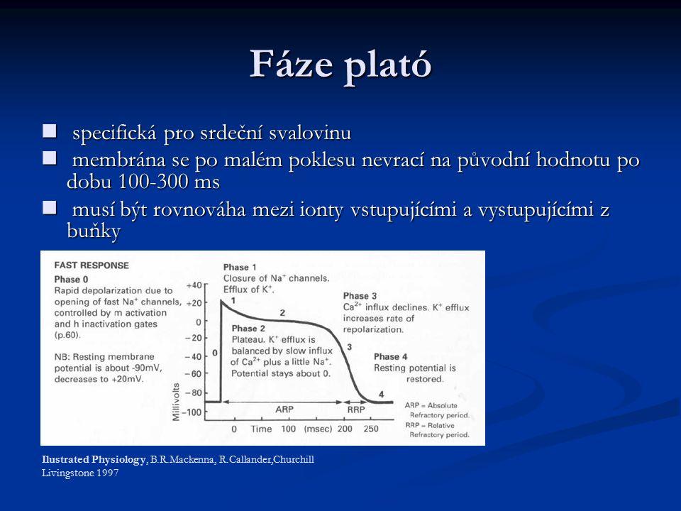 Fáze plató specifická pro srdeční svalovinu specifická pro srdeční svalovinu membrána se po malém poklesu nevrací na původní hodnotu po dobu 100-300 ms membrána se po malém poklesu nevrací na původní hodnotu po dobu 100-300 ms musí být rovnováha mezi ionty vstupujícími a vystupujícími z buňky musí být rovnováha mezi ionty vstupujícími a vystupujícími z buňky Ilustrated Physiology, B.R.Mackenna, R.Callander,Churchill Livingstone 1997