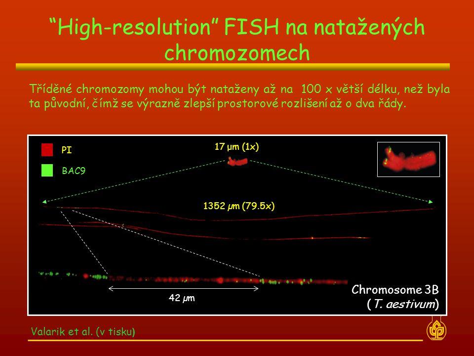 """""""High-resolution"""" FISH na natažených chromozomech Valarik et al. (v tisku ) Tříděné chromozomy mohou být nataženy až na 100 x větší délku, než byla ta"""