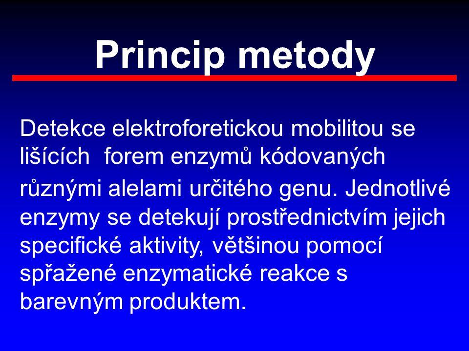 Princip metody Detekce elektroforetickou mobilitou se lišících forem enzymů kódovaných různými alelami určitého genu. Jednotlivé enzymy se detekují pr