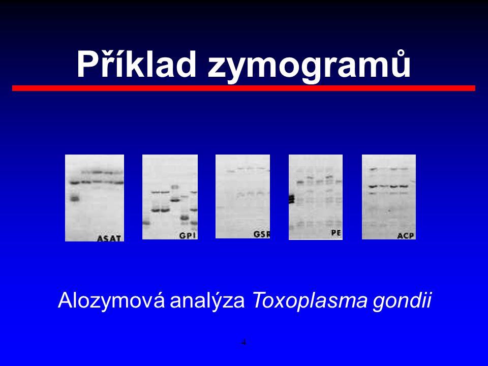 4 Příklad zymogramů Alozymová analýza Toxoplasma gondii