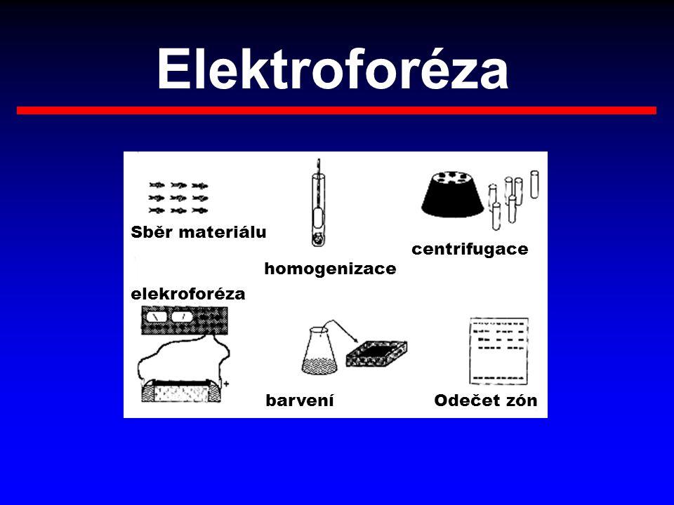 Elektroforéza homogenizace Sběr materiálu centrifugace elekroforéza barveníOdečet zón