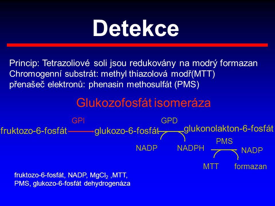 Detekce Princip: Tetrazoliové soli jsou redukovány na modrý formazan Chromogenní substrát: methyl thiazolová modř(MTT) přenašeč elektronů: phenasin me
