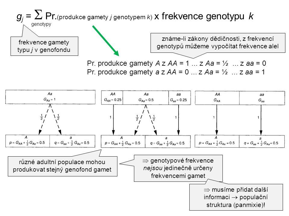 Pr. produkce gamety A z AA = 1... z Aa = ½... z aa = 0 Pr. produkce gamety a z AA = 0... z Aa = ½... z aa = 1 známe-li zákony dědičnosti, z frekvencí
