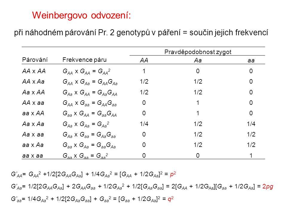 Párování Frekvence páru Pravděpodobnost zygot AAAaaa AA x AAG AA x G AA = G AA 2 100 AA x AaG AA x G Aa = G AA G Aa 1/2 0 Aa x AAG Aa x G AA = G Aa G