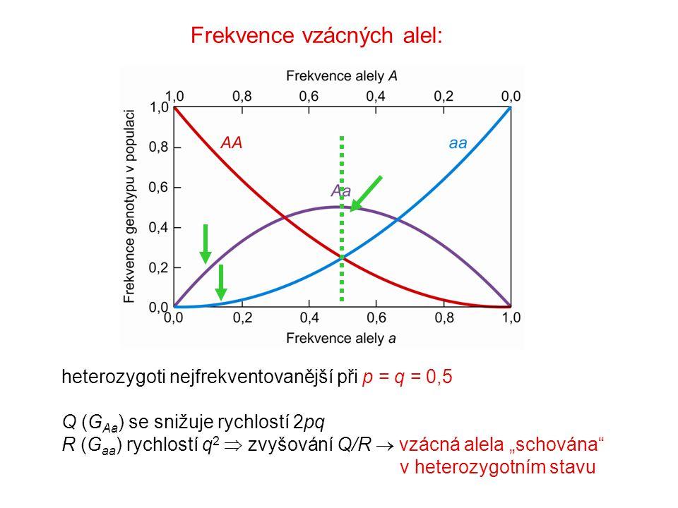 """heterozygoti nejfrekventovanější při p = q = 0,5 Q (G Aa ) se snižuje rychlostí 2pq R (G aa ) rychlostí q 2  zvyšování Q/R  vzácná alela """"schována"""""""