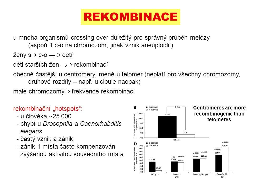 u mnoha organismů crossing-over důležitý pro správný průběh meiózy (aspoň 1 c-o na chromozom, jinak vznik aneuploidií) ženy s  c-o   dětí děti star
