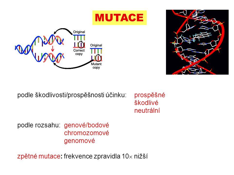 podle škodlivosti/prospěšnosti účinku:prospěšné škodlivé neutrální  MUTACE podle rozsahu:genové/bodové chromozomové genomové zpětné mutace: frekvence