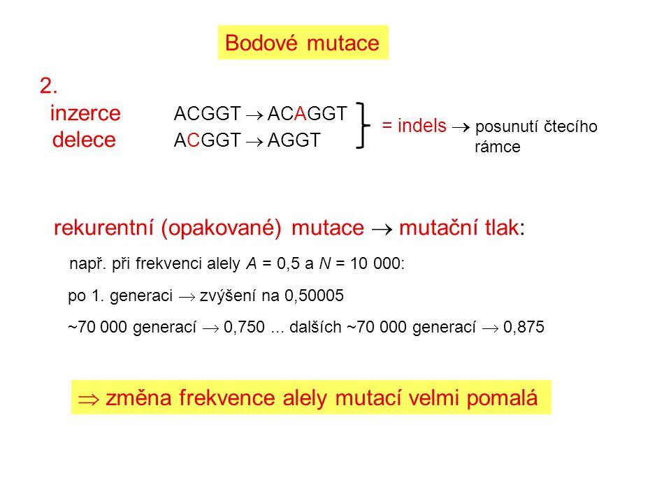 rekurentní (opakované) mutace  mutační tlak: např. při frekvenci alely A = 0,5 a N = 10 000: po 1. generaci  zvýšení na 0,50005  70 000 generací 