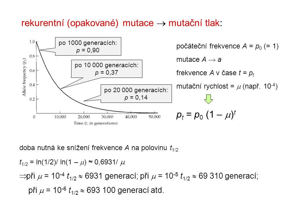 rekurentní (opakované) mutace  mutační tlak: počáteční frekvence A = p 0 (= 1) mutace A  a frekvence A v čase t = p t mutační rychlost =  (např. 10