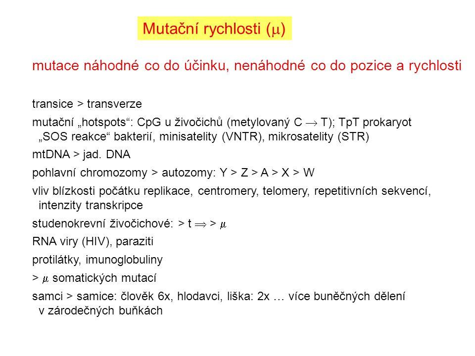 """Mutační rychlosti (  ) mutace náhodné co do účinku, nenáhodné co do pozice a rychlosti transice > transverze mutační """"hotspots"""": CpG u živočichů (met"""