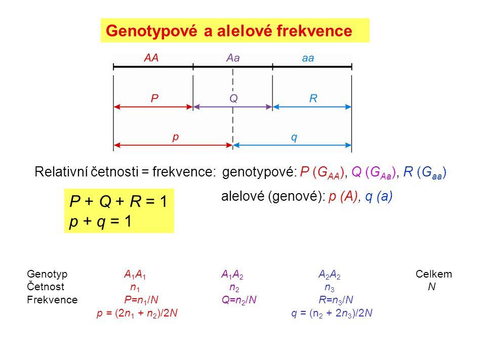 Genotypové a alelové frekvence GenotypA 1 A 1 A 1 A 2 A 2 A 2 Celkem Četnost n 1 n 2 n 3 N FrekvenceP=n 1 /NQ=n 2 /NR=n 3 /N p = (2n 1 + n 2 )/2N q =