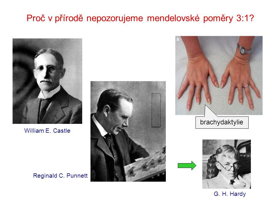 William E. Castle Proč v přírodě nepozorujeme mendelovské poměry 3:1? G. H. Hardy Reginald C. Punnett brachydaktylie