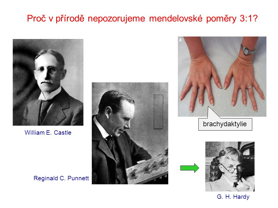 Godfrey Harold Hardy (1877-1947) Wilhelm Weinberg (1862-1937) 1908